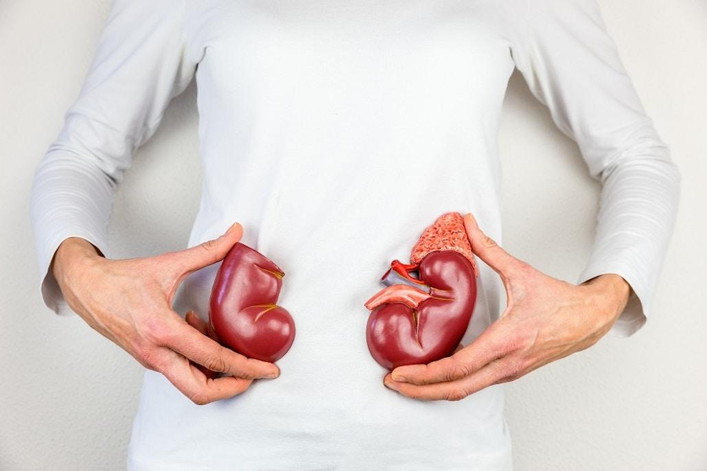Vivoo Kidney Box