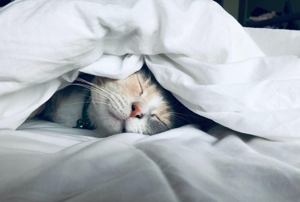 Meditation For a Good Night Sleep